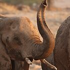 African Dreaming ~ Animals by ChrisCoombes