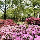 Rhododendrons 2 by Shoshonan