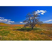 Tree Alone on a Hill Photographic Print