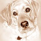 Indi in sepia colors by Margaret Harris