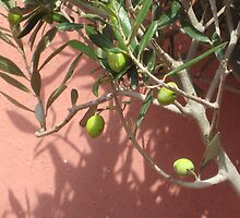 Greek olives by Francesca Muir