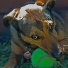 Fritz and his tennis ball by Rick Fin