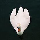 swan by ben reid