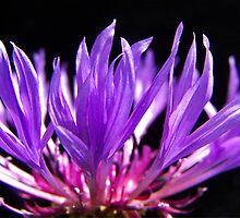 Meerkerk Garden Blossom by Rick Lawler