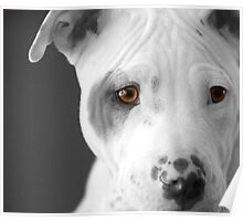 Freckles the Pit Poster