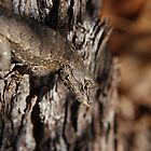 Fence Lizard by cpad04