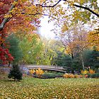 Autumn in Central Park by cpad04