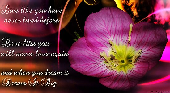 Live Love Dream ....................... by bamagirl38