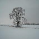 Solitary Snowfall by debbiedoda
