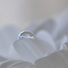 ~Whispery White Beauty~ by Janitka