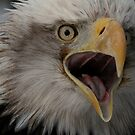 Bald Eagle Talking... by Larry Trupp