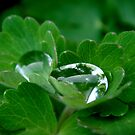 fresh drops by Eugenio