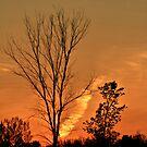 Shadows Tree Dusk by terrebo