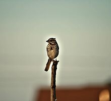 Small Bird by terrebo