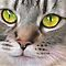 Green & Yellow Cat Eyes