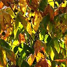Autumn colours 3 by MikeO