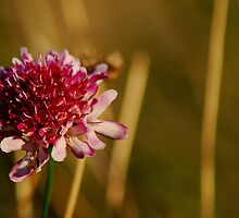 my wildflower     by deannedaffy