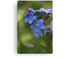Blue wild flowers Canvas Print