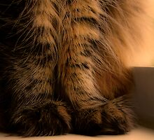 Furry Feet by AngelPhotozzz