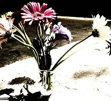 Shadow On The Gerberas by Vanessa Barklay