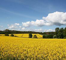 Oilseed rape fields by Trine