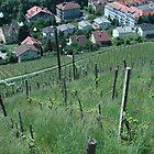 Vineyard towards town by Diego Marando