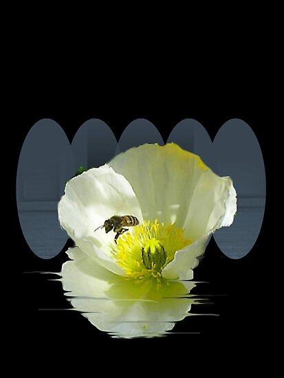 Poppy Bee by Ann Warrenton