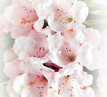 Pretty in Pink by Catherine Hamilton-Veal  ©