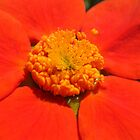 orange macro by Eugenio