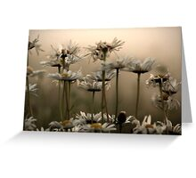 Daisies In The Fog Greeting Card