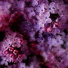 Lovely Lilacs by Ann Garrett