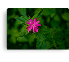 Wild Flowers - Red Campion Canvas Print