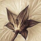 Silken Parasol by AnnieD