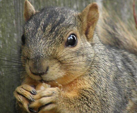 Ah, Nuts by Joe Powell