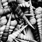 Shells by Adam Marlow