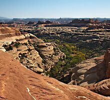 Canyonlands by Portia Soderberg