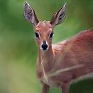 Doe Eyed by laureenr