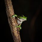 Green Tree Frog by Kana Photography