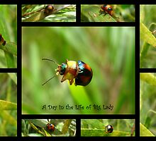 A Day in the Life of Big Lady by Vanessa Barklay