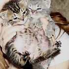 2 kittens by DreamCatcher/ Kyrah Barbette L Hale