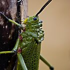 Locust on Palm Tree Bark by RatManDude