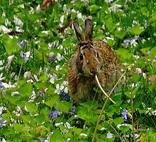 Hungry Bunny by Barbara Gerstner