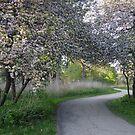 Arborateum Path 1 by AuntieJ