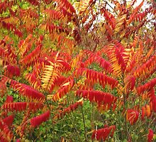 Flame Red Bushes by Paula Parker