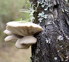 Gilled Bracket fungus by Nurjahan