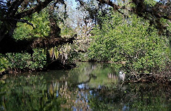 Estero River at Koreshan by Barry Goble