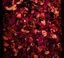 Autumn Leaves by Benjamin Nitschke