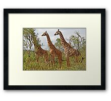Hide and Seek, Arusha National Park, Tanzania, Africa Framed Print