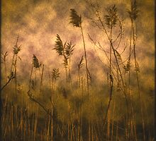 reeds in the storm  by Eric Maki