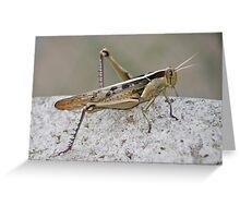 Red Locust Greeting Card